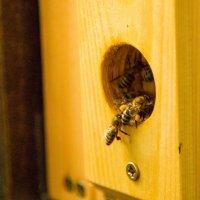 A mi méheink